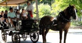 Take a Carriage Ride in Historic Charleston