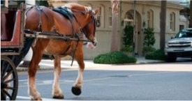 Take a carriage ride in Charleston